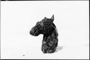 Horse head_C